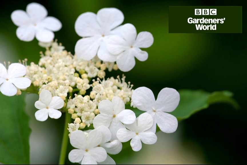 How to create a wildlife garden part nine video