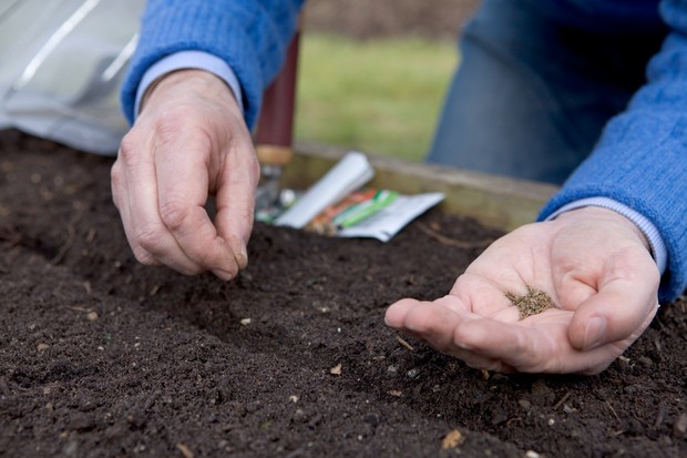 sowing-carrots-3