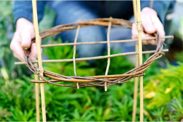 Making willow plant supports - threading the circle onto bamboo canes