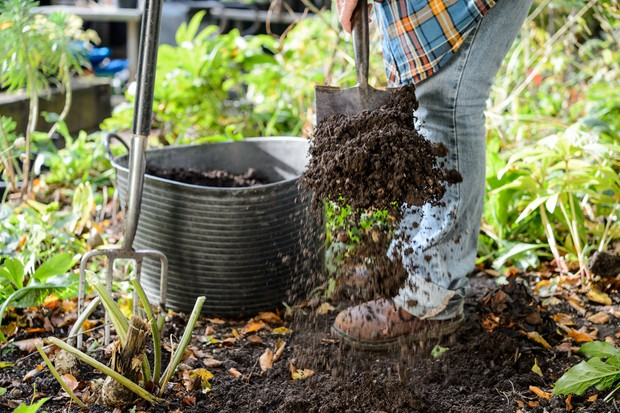 Shovelling organic matter from a trug to fork into the ground
