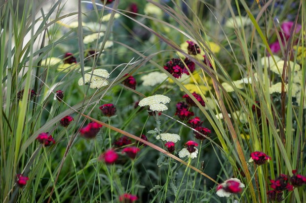 Vivid pink dianthus flowers set against creamy yarrow and grasses