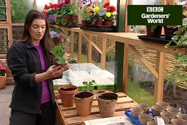 How to grow a peanut plant
