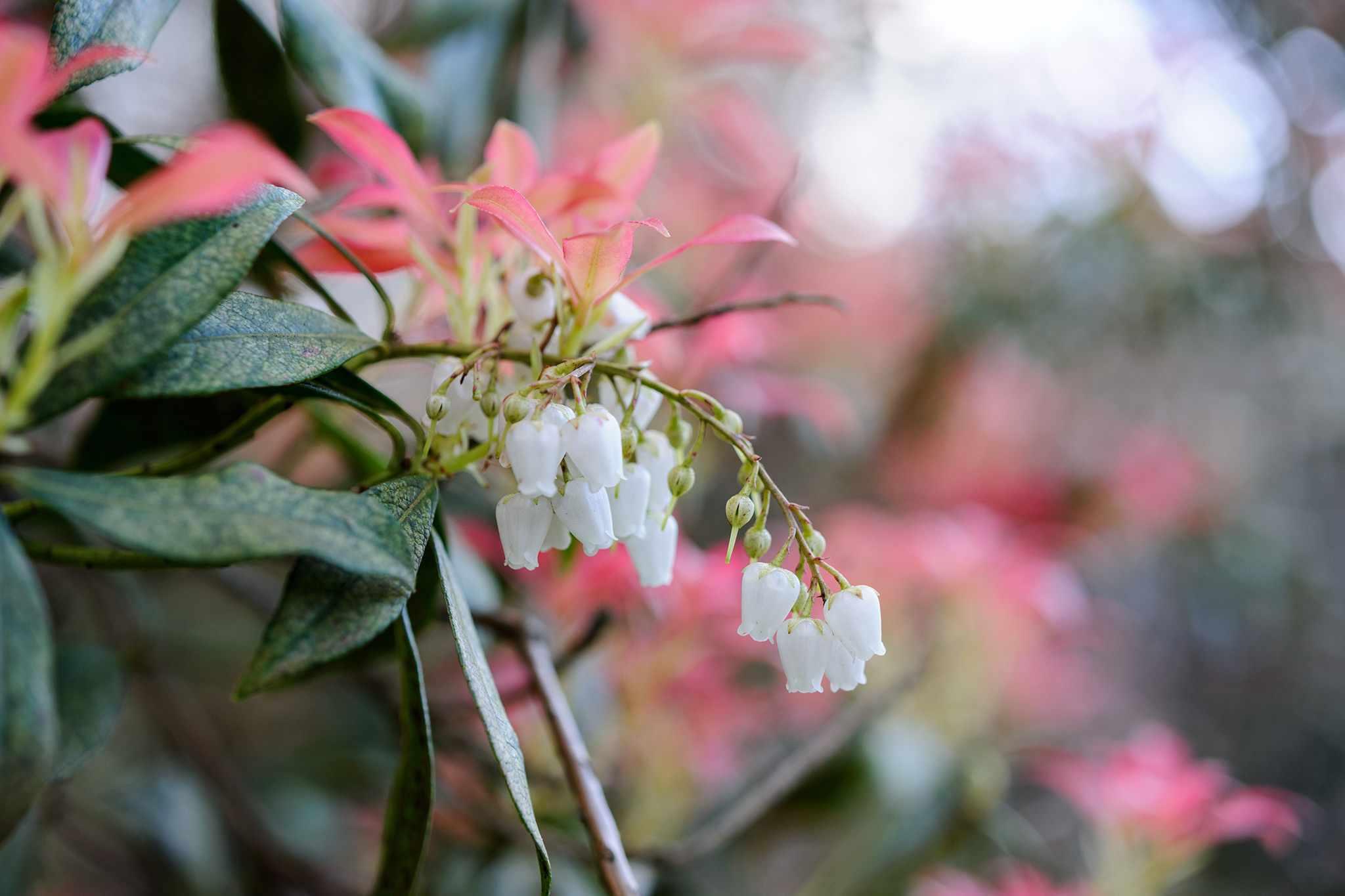 10 Plants for Acid Soils