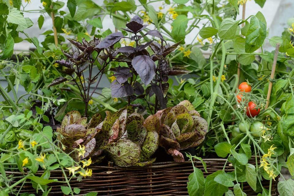 Growing Vegetables In Pots Bbc Gardeners World Magazine