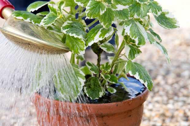 watering-houseplant-3