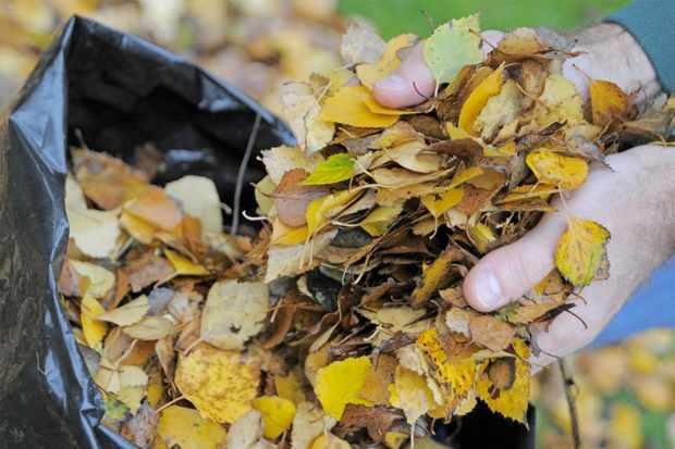 Making leaf mould