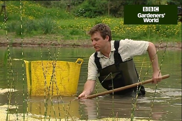 How to maintain a garden pond