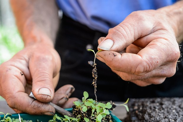 pricking-out-seedlings-5