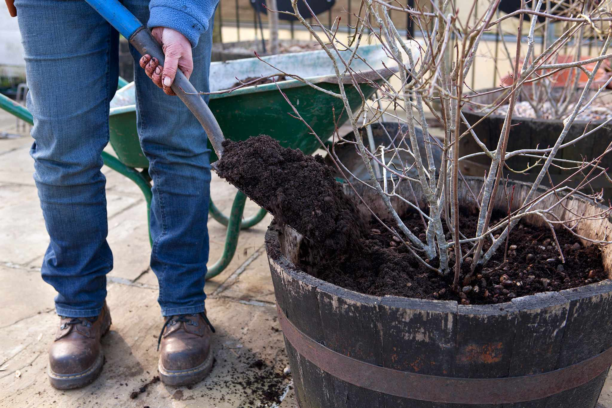Refreshing the compost in pots