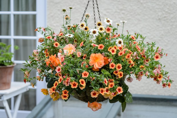hanging-basket-planted-with-orange-flowers-for-full-sun-2