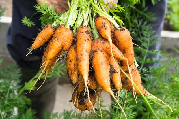 handful-of-carrots-2