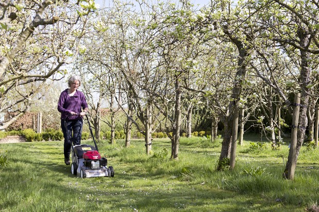 Mowing a row between trees in an orchard