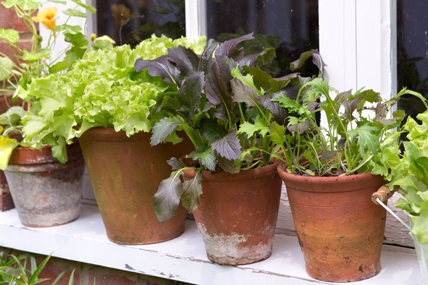 terracotta-pots-planted-up-with-lettuces-and-radishes-2