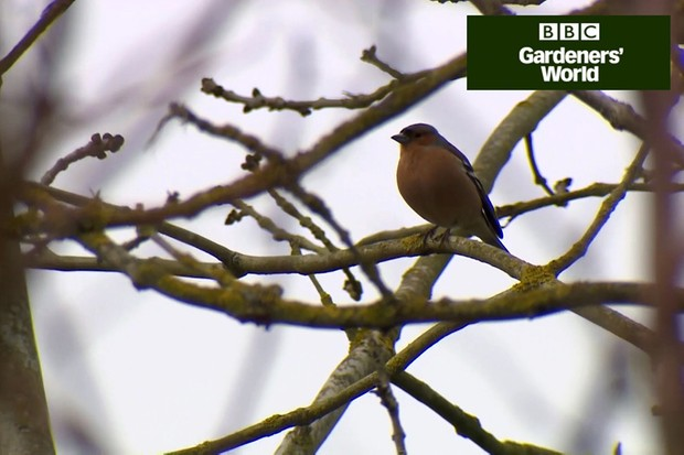 How to create a wildlife garden part one video