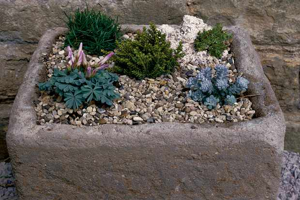 How to make an alpine trough