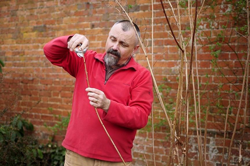 Pruning - basic cuts video