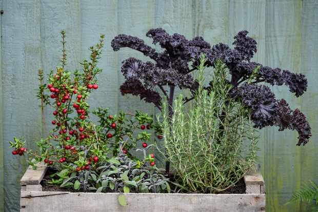kale-and-rosemary-2