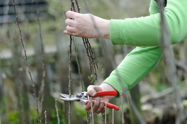 trimming-a-deciduous-hedge-2