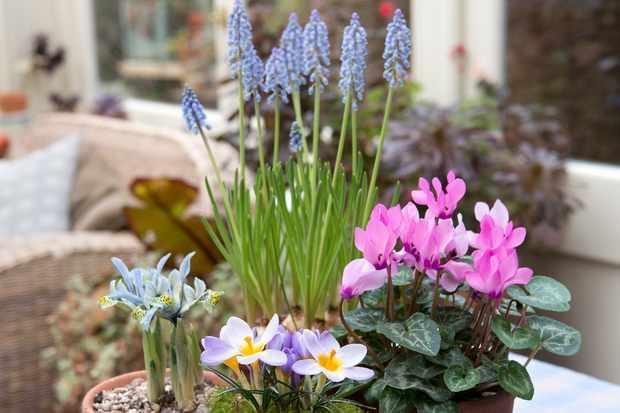 Spring bulb tray