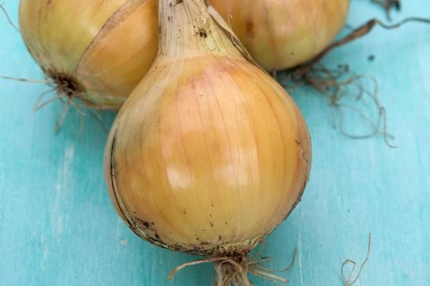 onion-setton-4