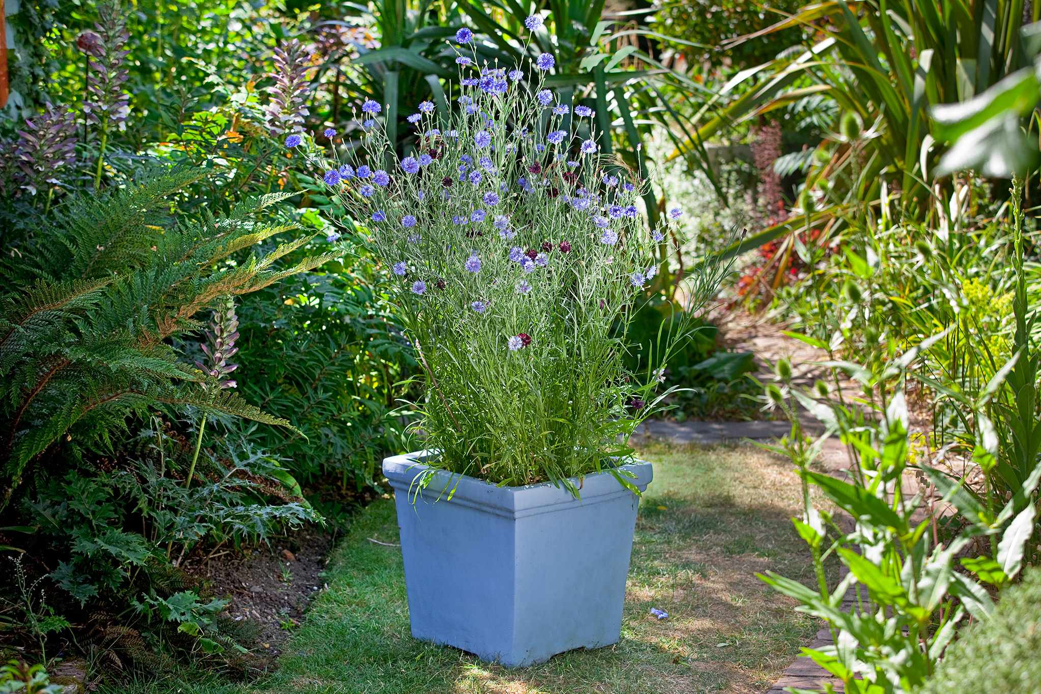 How to create a wildflower pot