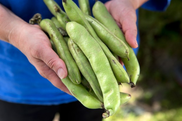 broad-beans-for-shelling-2