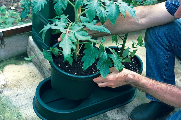 Watering kit - placing the pot in a tray