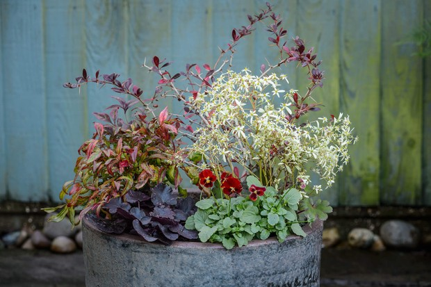 nandina-heuchera-and-berberis-2