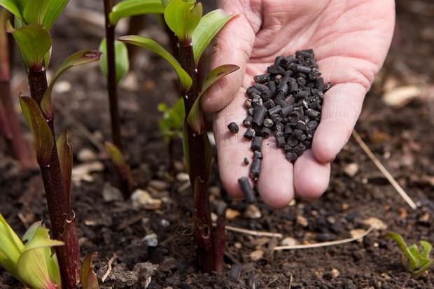 Sprinkling pellet feed beside plant stems