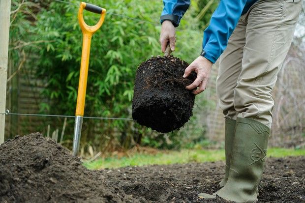 How to plant a tree - teasing out the roots