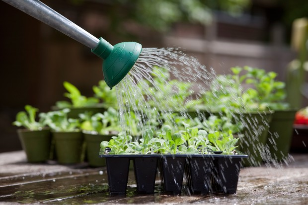 water-plug-plants-as-soon-as-they-arrive-and-regularly-thereafter
