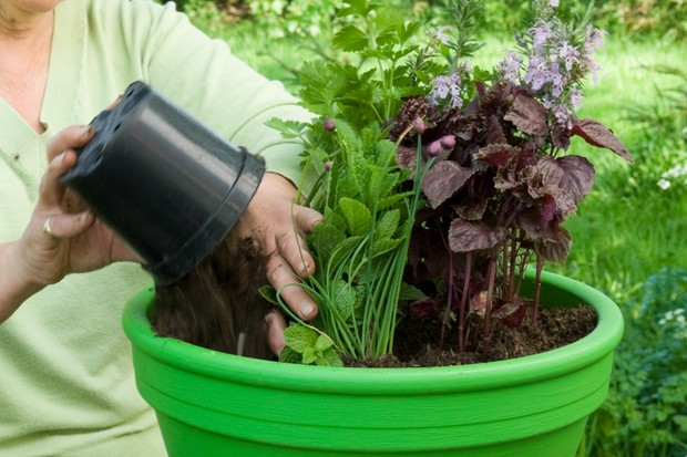 Herb pot for meat dishes - adding compost around the herbs