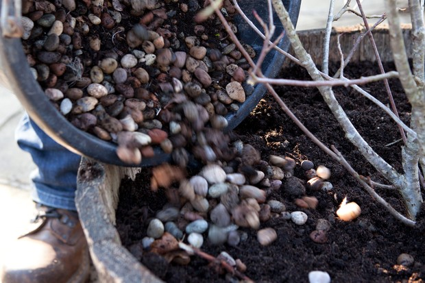 adding-pebbles-to-the-container-2