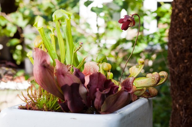 a-carnivorous-plant-container-3