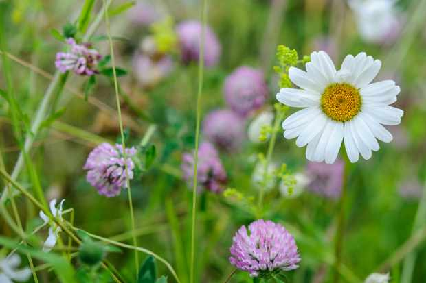 How to maintain a mini-meadow