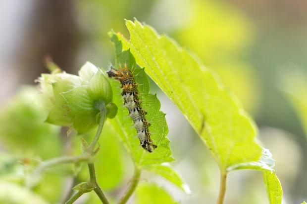 caterpillar-3