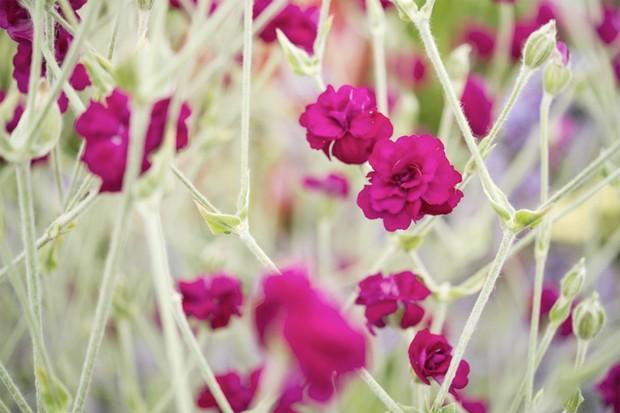 10 Flowers For Clay Soil Gardenersworldcom