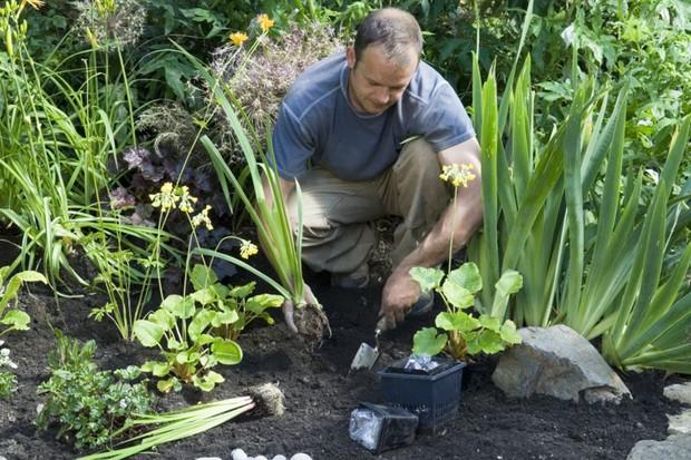 planting-moisture-loving-plants-into-boggy-soil
