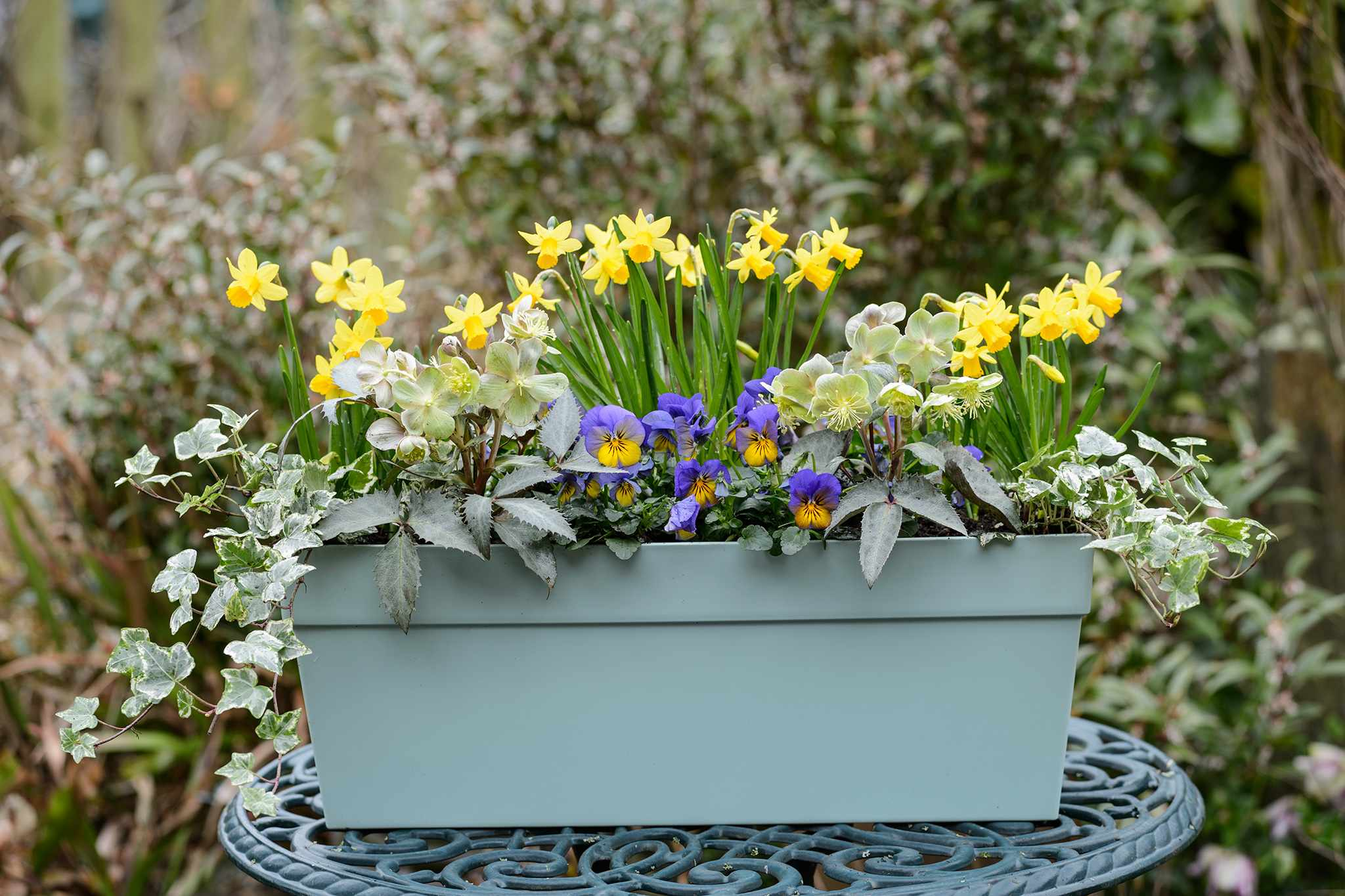 Four Hellebore Container Ideas