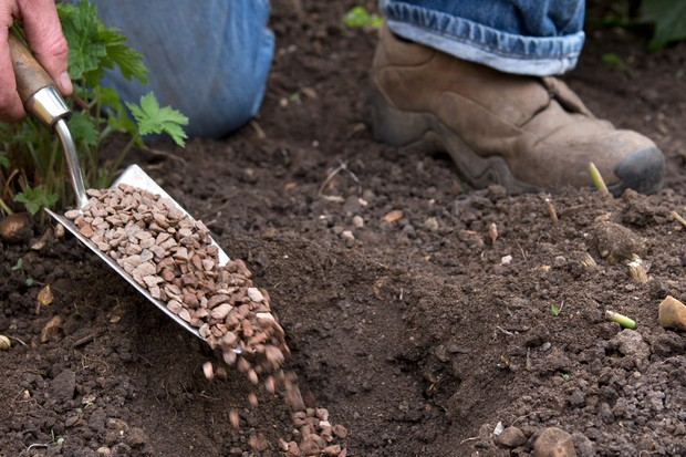get-the-best-from-wet-soil-add-grit-when-planting-4