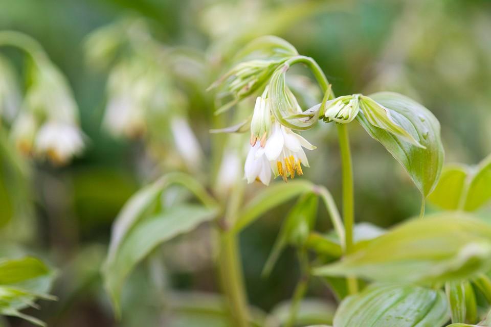 Best Plants For A Shady Border Bbc Gardeners World Magazine