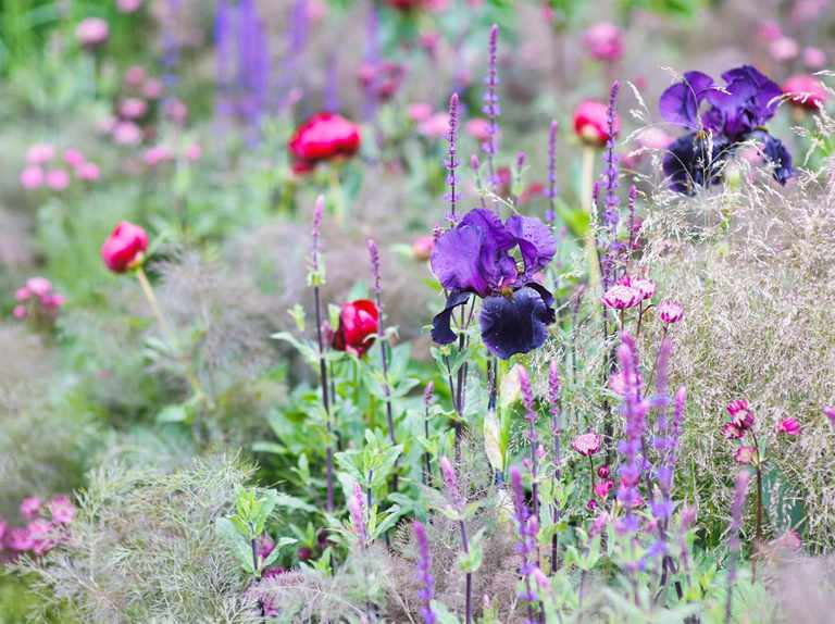 Plant Types Explained Bbc Gardeners, What Is The Usual Meaning Of Term Bedding Plant
