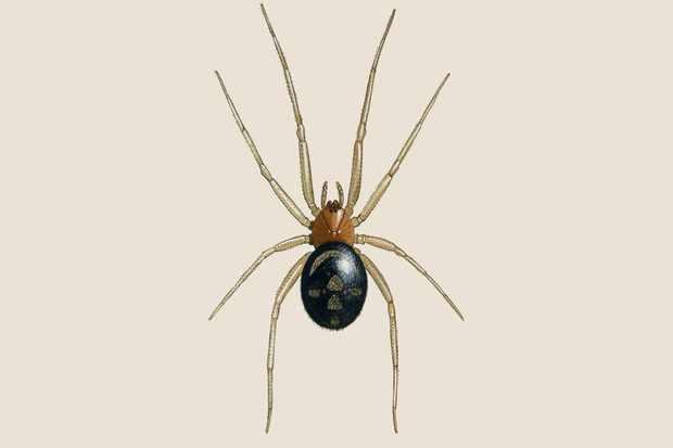 Garden Wildlife Identifier: Spiders
