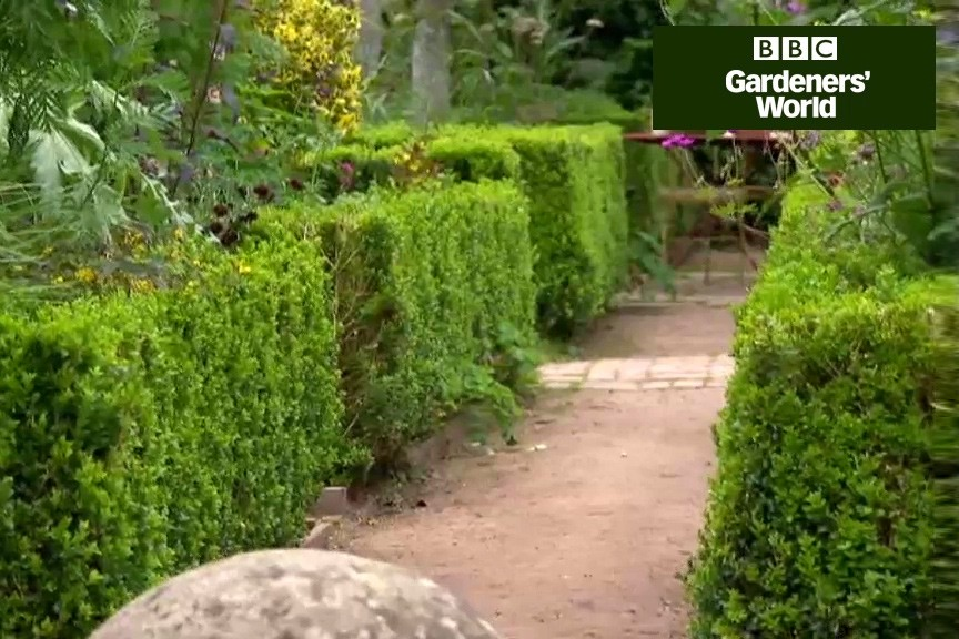 How to keep box hedges neat all winter video