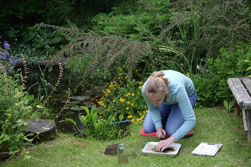 Pond dipping video