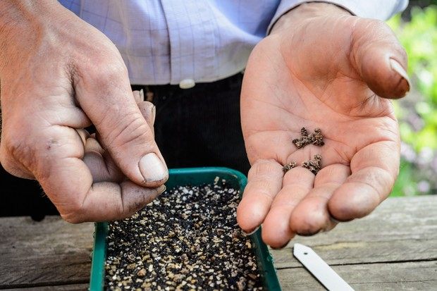 sowing-seed-in-shade-2