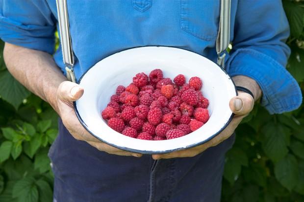 bowl-of-freshly-picked-raspberries-3