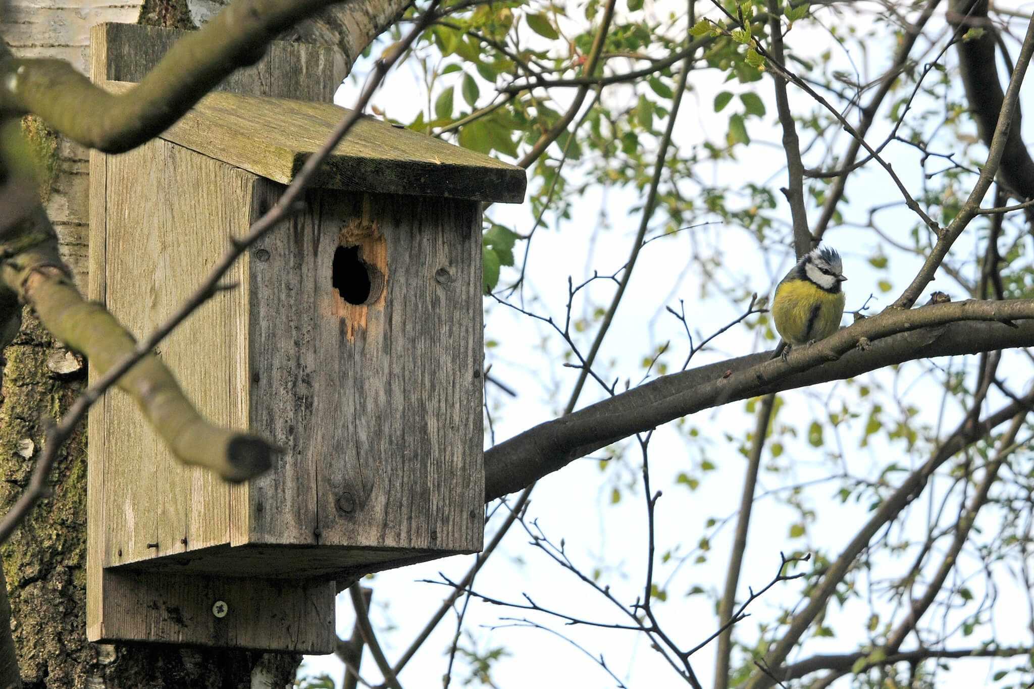 Homemade bird box
