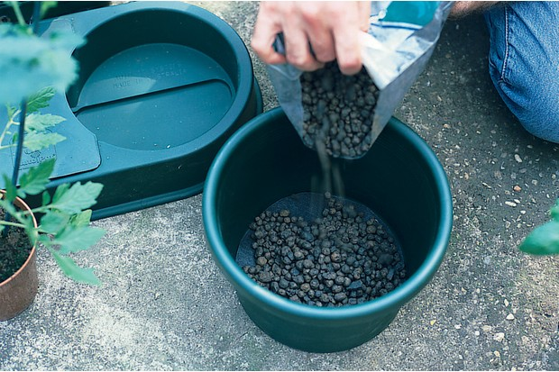 Watering kit - adding clay pebbles to the pot
