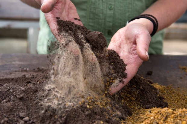 How to take cuttings from alpines - mixing grit, loam and sand to make a free-draining compost